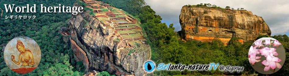 8つの世界遺産 Eight of World heritage